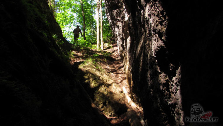 Вид на летний лес от входа в пещеру