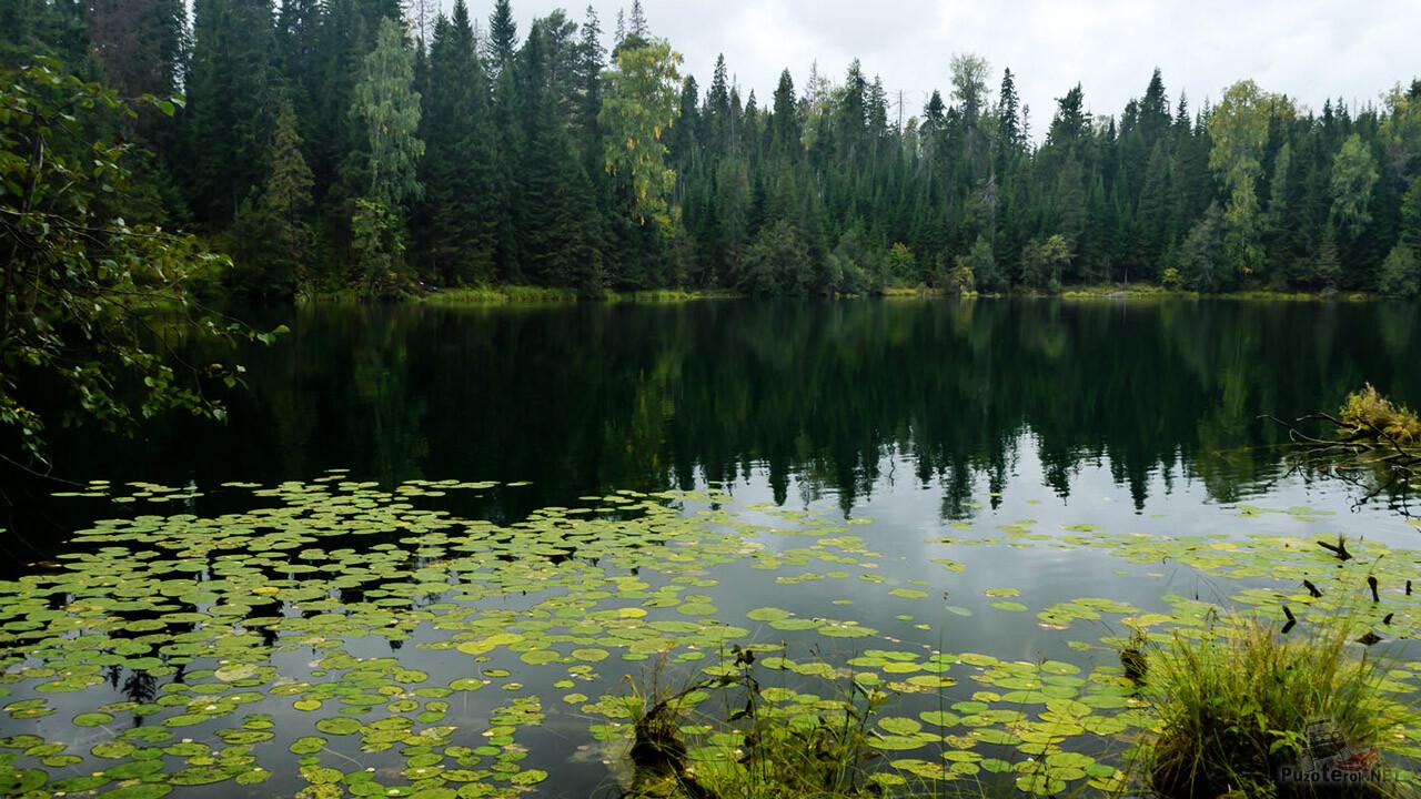 Изумрудная оправа Бездонного озера в Свердловской области