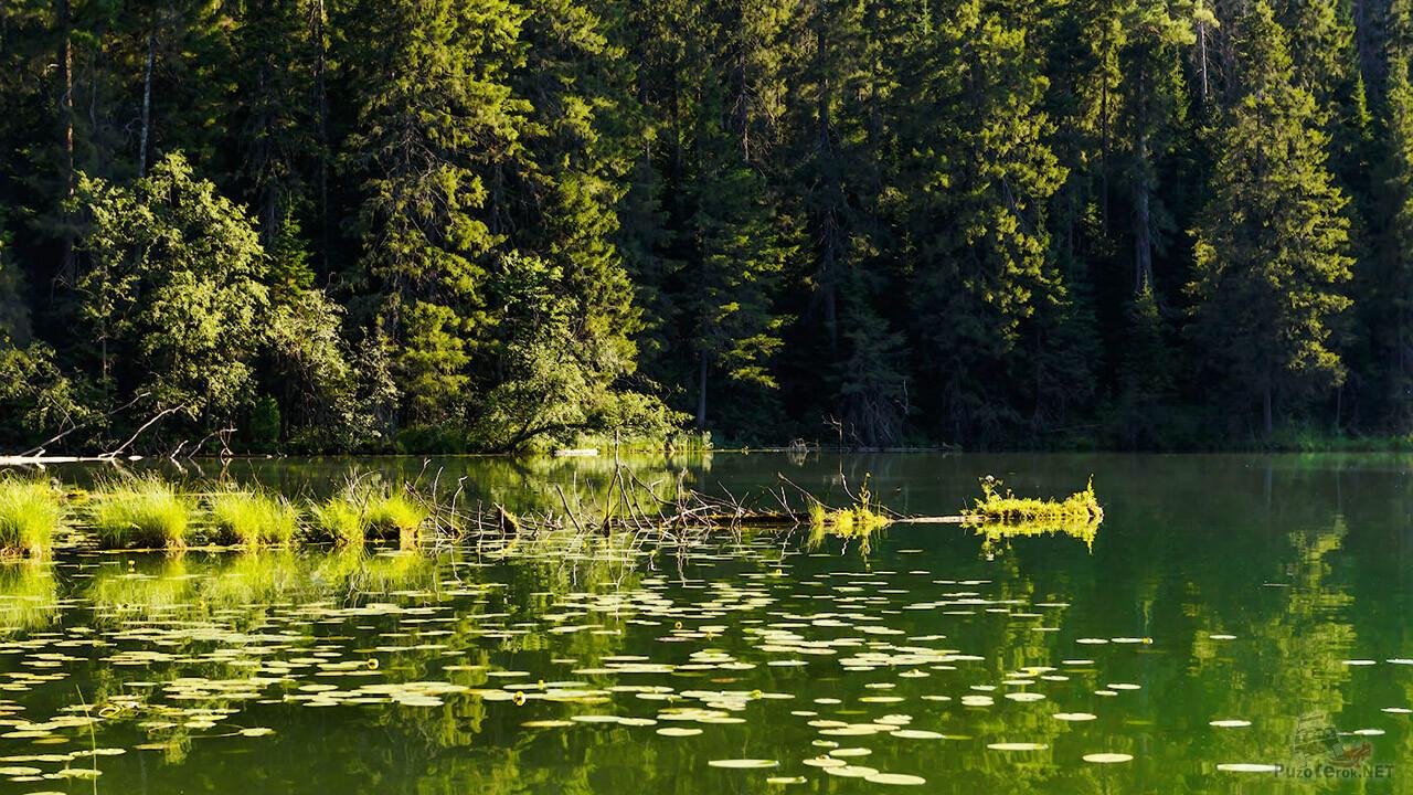 Летняя зелень отражается в водной глади