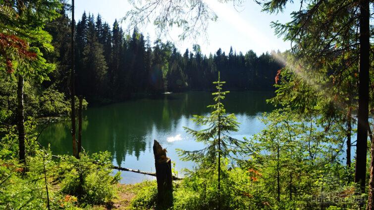 Тропинка к озеру среди летней зелени