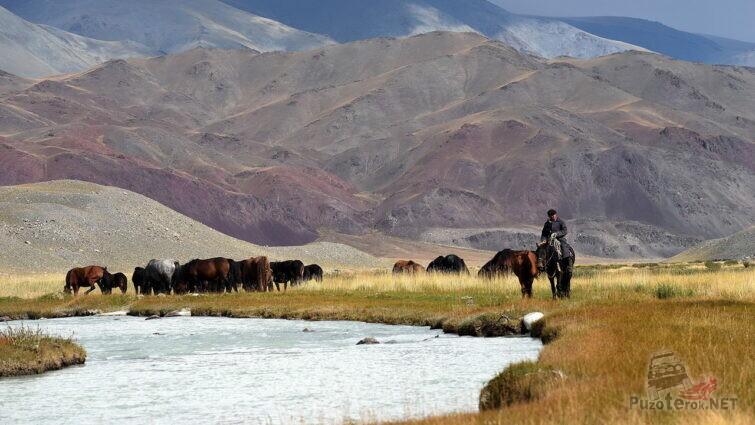 Пастух со стадом лошадей
