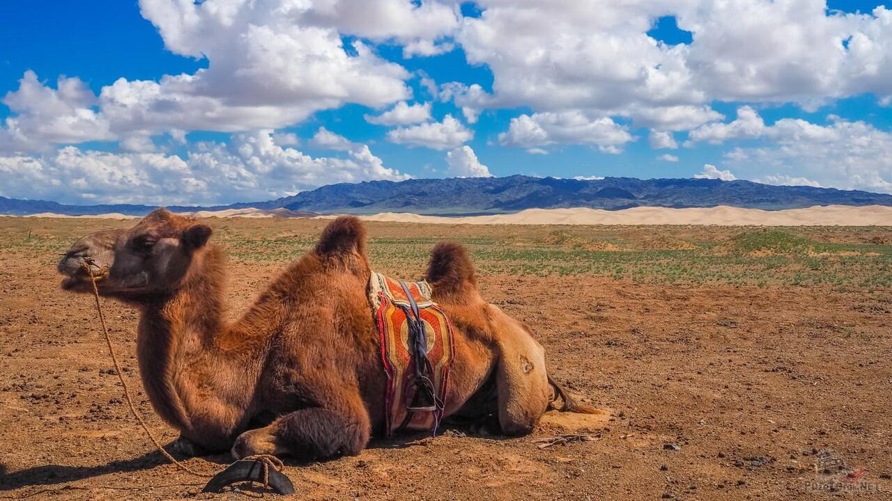 Монголия внутри (фильм)