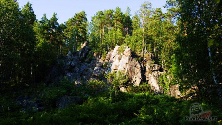 Изумрудно-зелёный летний лес
