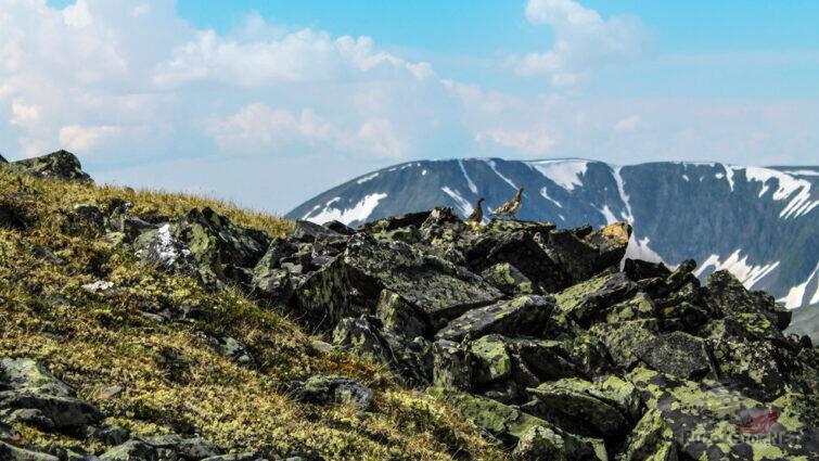 Каменистый ландшафт Восточных саян