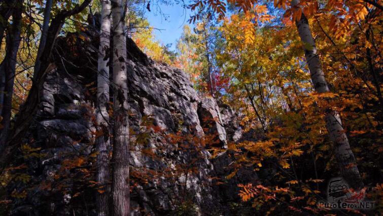 Красочная осенняя листва на фоне скал