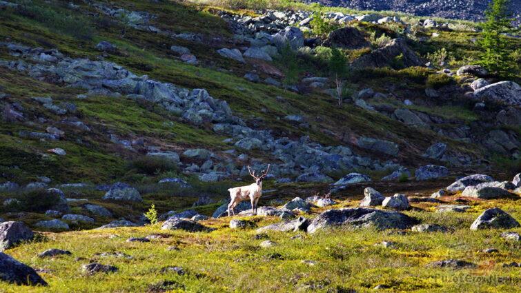 Олень среди скал у подножья горы