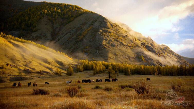 Табун лошадей ранним осенним утром