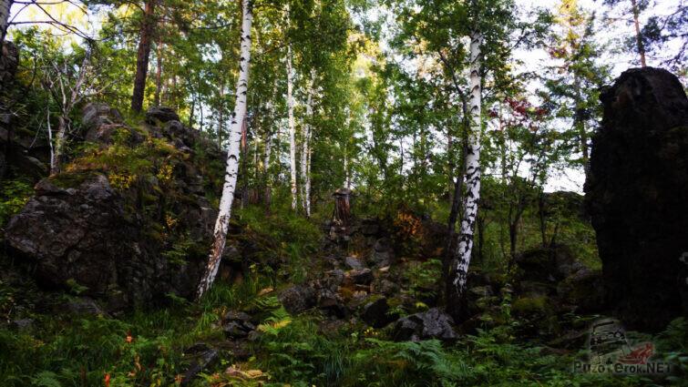 Тенистый летний лес на склоне горы
