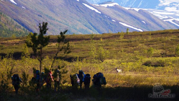 Туристы встретили оленя